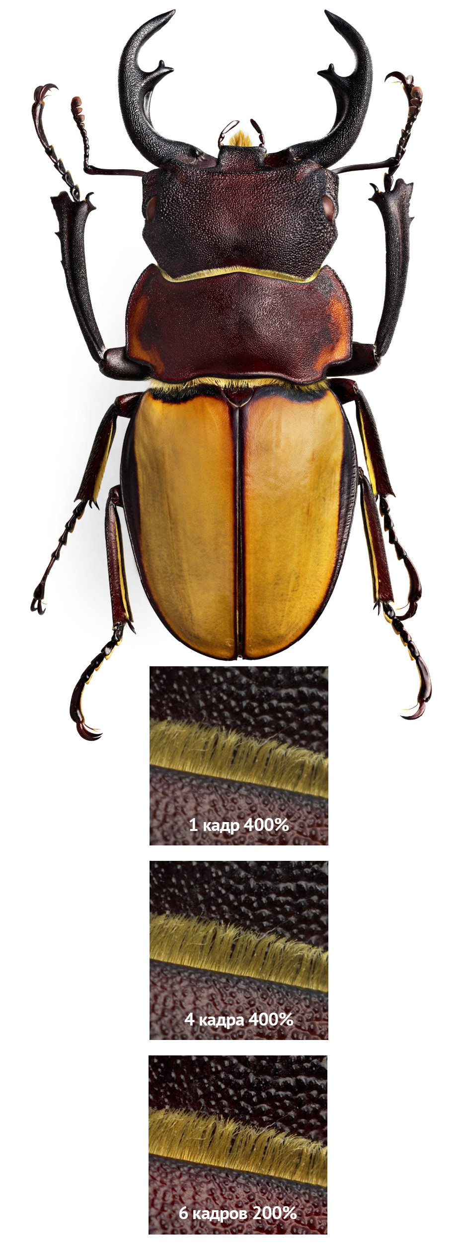 макро фотография жука на белом фоне с новой цифровой фотокамеры Hasselblad H6D-400c MS среднего формата